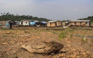 A dead Bodó in front of stranded floating houses on the bed of the Negro river, near Manaus, Brazil.