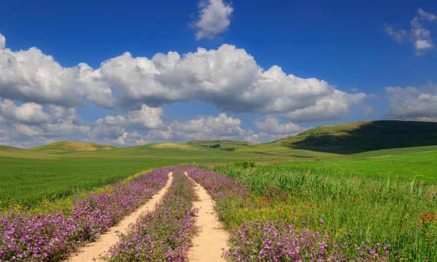 Puglia landscape with wildlfowers.