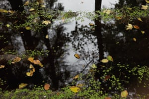 Reflections on a Lake in the Forest, Northern Germany, 2015