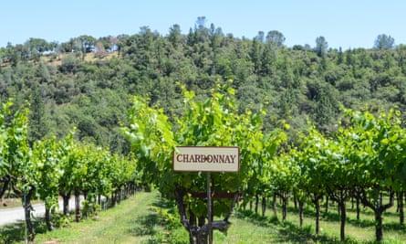 Chardonnay: 'Until Bridget Jones it was really sexy,' wrote the wine critic Oz Clarke.