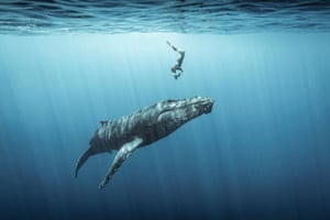 A freediver duck-dives to capture a photograph of a humpback whale. Reunion Island. Third place: Ocean Adventure Photographer of the Year