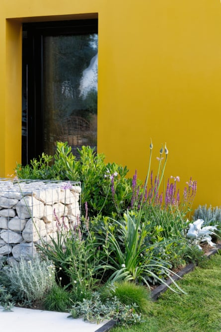 Colour provides a striking backdrop for a bed of herbs.