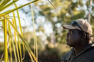 Head Ranger Robin Dann inspects a purple crowned fairy wren nest in a pandanus tree