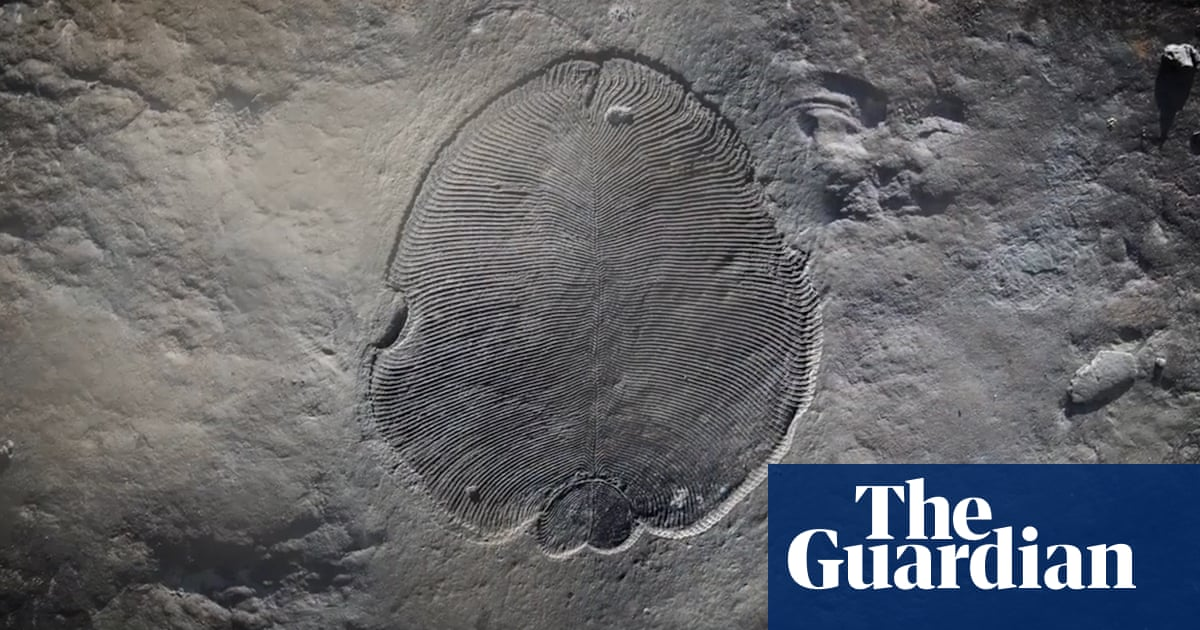Scientists reveal secrets of oldest known animal fossil – video | Science | The Guardian