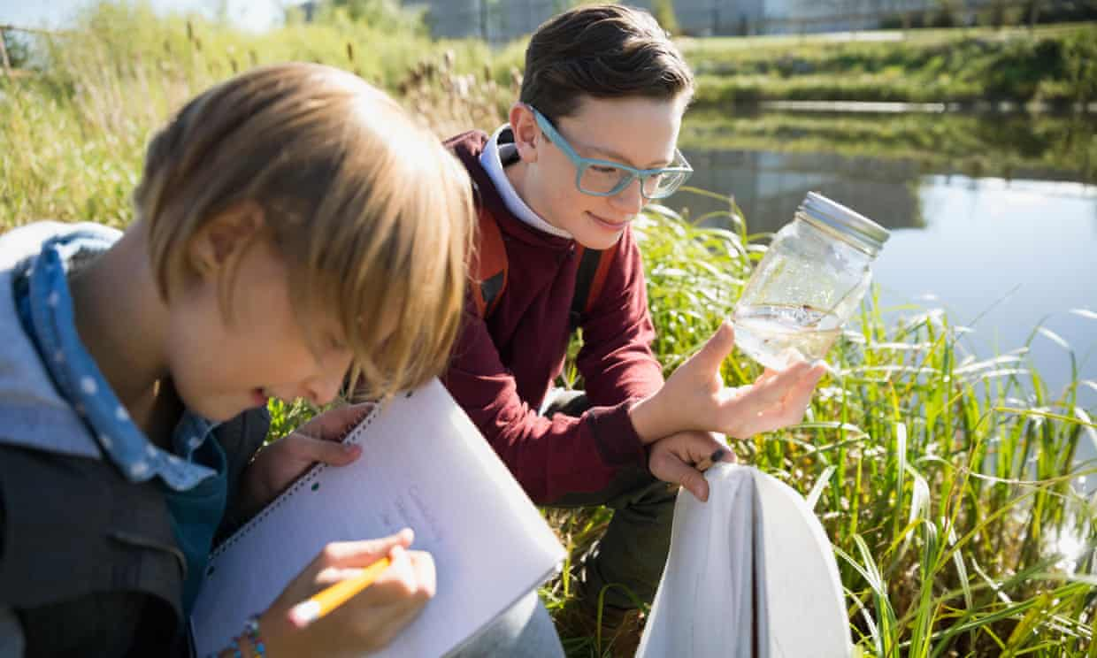 children investigate pond life