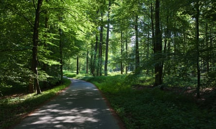 The Sonian Forest, Foret de Soignes, or Zonienwoud, 11,000 hectare woodland to the south-east of Brussels