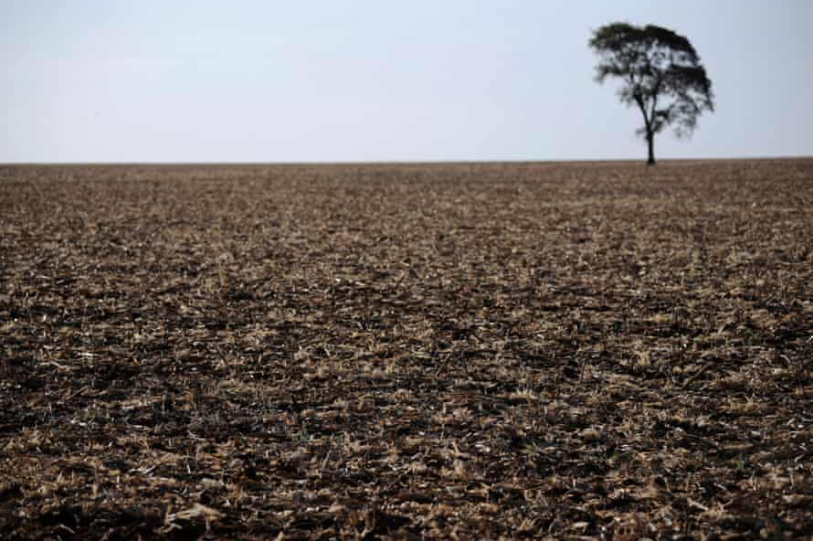 A lone tree stands on land claimed by Guarani Kaiowa Indians as their ancestral territory called Tekoha Boqueron, now stripped of its original forest to form part of a sugarcane plantation, near Dourados, Mato Grosso do Sul state.