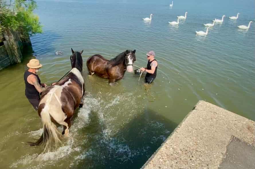 Caballos varados en el río Crouch, Essex, Reino Unido?