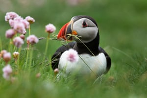 puffin by some wildflowers
