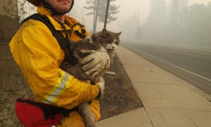 A firefighter in Paradise rescues a cat.