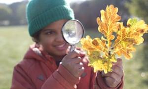 A child on a Woodland Trust tree ID walk.