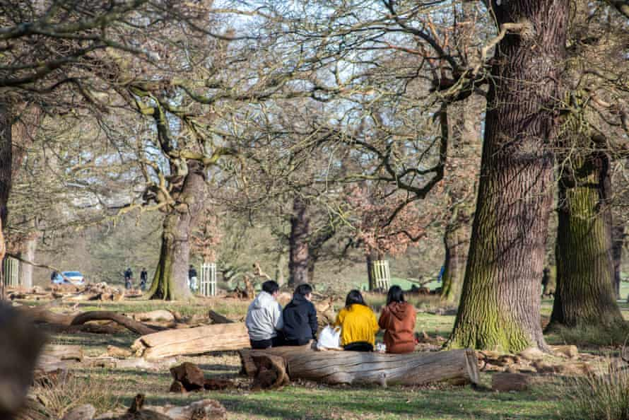 Dead wood and fallen limbs from trees are now left in Richmond Park to help species such as saproxylic invertebrates. They also make handy seats.