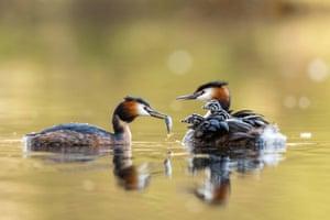 Water birds feed