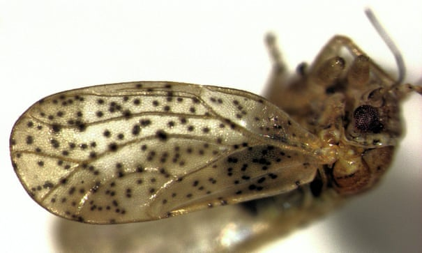 New Zealand insect named after hobbit Frodo Baggins from Lord of the Rings