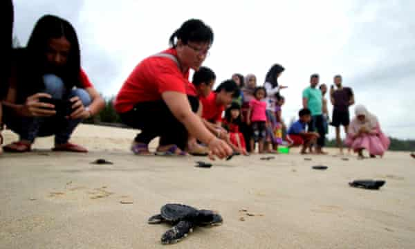 Chinese people release baby turtles into the sea in Indonesia