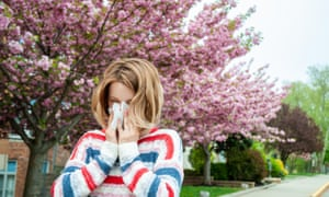 In London, common landscaping practices have led to an abundance of tree pollen.