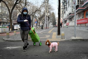 Beijing, China. A man wearing a face mask walks his dog, also in a face mask, as he pulls a trolley of shopping. The number of deaths and new cases in China's Covid-19 coronavirus outbreak rose dramatically this week after the authorities changed the way the infections are counted, raising concerns that the severity of the outbreak has been under-reported