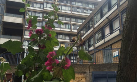 Guerrilla gardening at Elephant and Castle