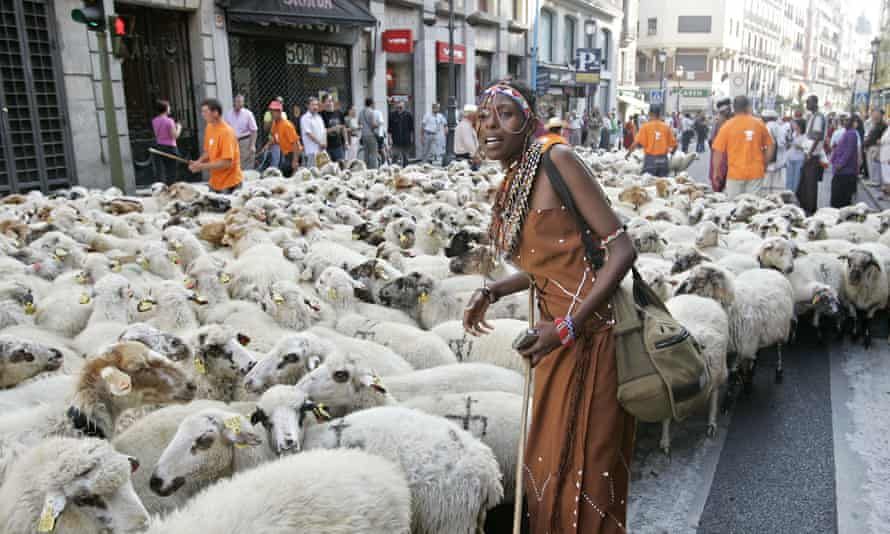 A flock of sheep is driven through Madrid as farmers protest about the threat of urbal sprawl on ancient grazing routes.