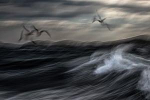 Birds category runner-up:Restless Sea by Jiri Hrebicek (Czech Republic)European Herring Gulls, Norway