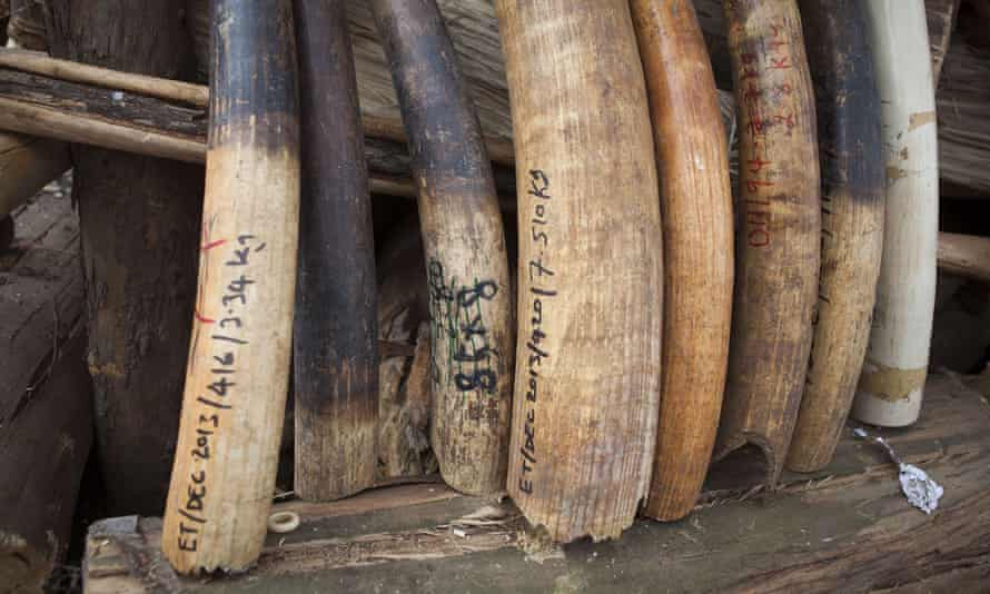 A haul of elephant tusks and ivory items was burned in 2015 to deter poachers in Ethiopia, but success has been limited.