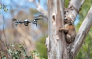 A drone hovers a distance from a koala to capture an image to be sent to a screen in a nearby van for closer inspection.