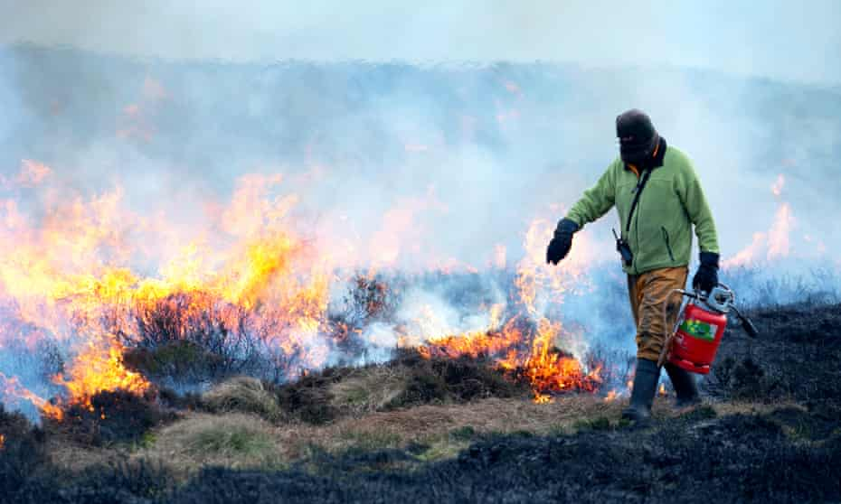 A Gamekeeper carrying a Weed Wand which blasts the heather with intensive heat during a burn on Bingley Moor in West Yorkshire.