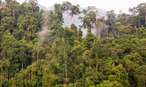 Cloud forest in the Leuser ecosystem, August 2015.