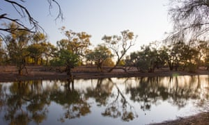 Dusk reflections of gum trees (eucalyptus) around a billabong in outback Queensland, Australia