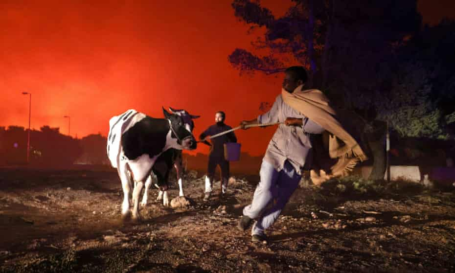 Locals fleeing with their animals as a wildfire rages in a suburb north of Athens.