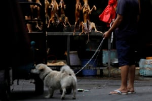 A man walks with his pet dog past a stall during the local dog meat festival in Yulin.