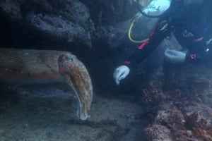 Elle Hunt with an Australian giant cuttlefish at Cabbage Tree Bay in Manly, Sydney.