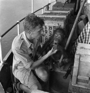 With Charlie, the orangutan, on board the Kruwing, just off Borneo. 'The little creature was male, about two years old and we called him Charlie... we were all astonished at the speed with which Charlie settled down. Soon he was not only tolerant of my fondling but sought it.'