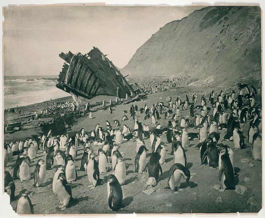 Wreck of the Gratitude, Macquarie Island, 1911.