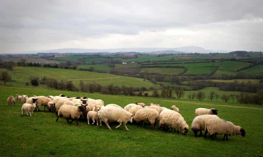 A sheep farm near Abergavenney, south Wales.