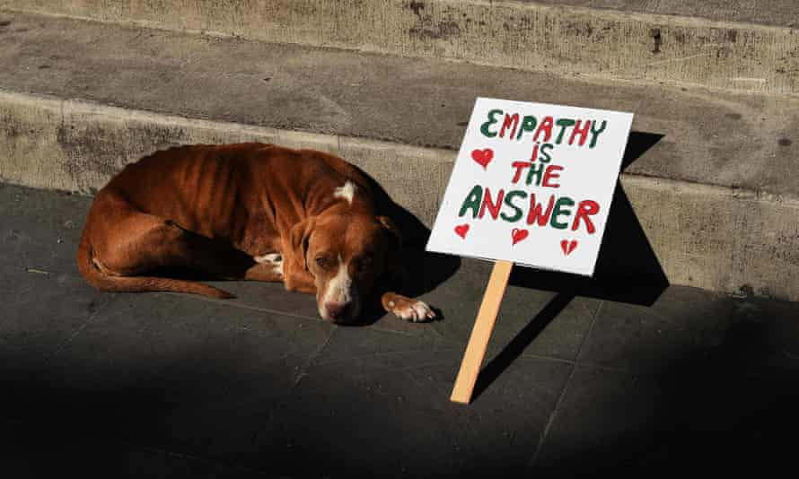 A dog rests next to a sign during the women's march in the Mexican city of Ajijic.