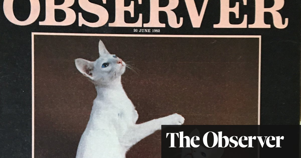 From the archive: are we a nation of cat people?