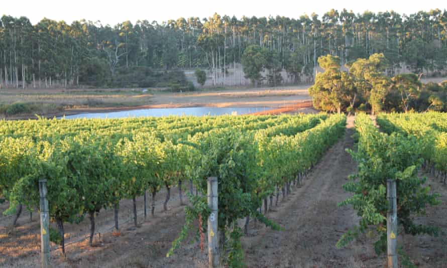 Grapes and gum trees: the mild, maritime climate of Margaret River, Western Australia's biggest wine region.