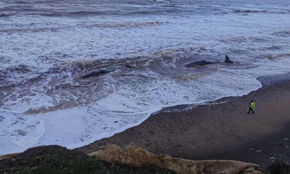 The whales at the beach between Tunstall and Withernsea in east Yorkshire.