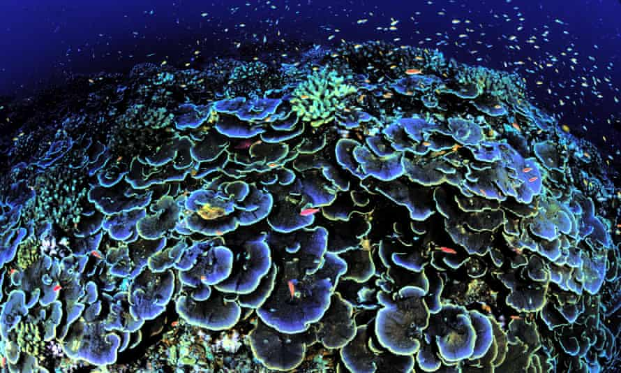 Coral is seen off Jarvis Island, part of the remote and uninhabited Pacific island chains set aside as national monuments.