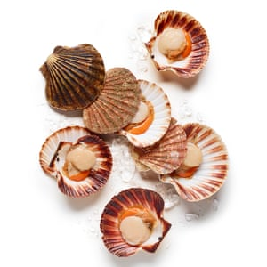 Get a fishmonger to clean the scallops for you on the half-shell – that way, you'll know they're really fresh.