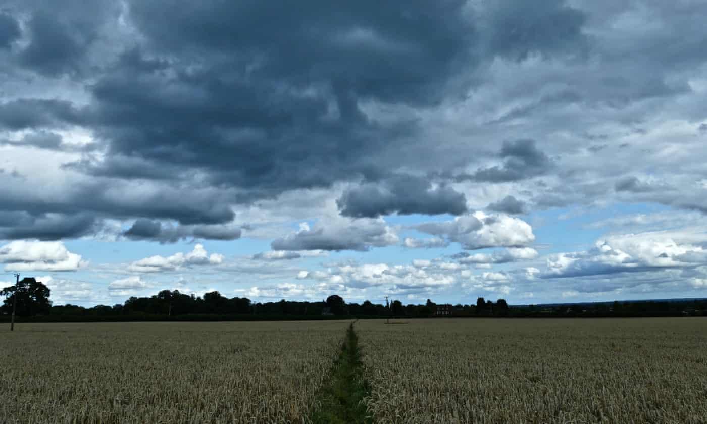 August rainfall brings UK wheat harvest to 'shuddering halt'