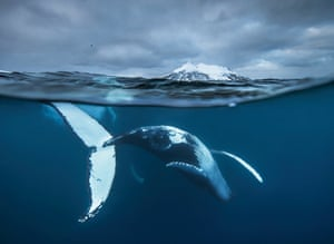 Arctic Underwater Dance, by Audun Rikardsen, Fritz Pölking Prize 2016 winner.