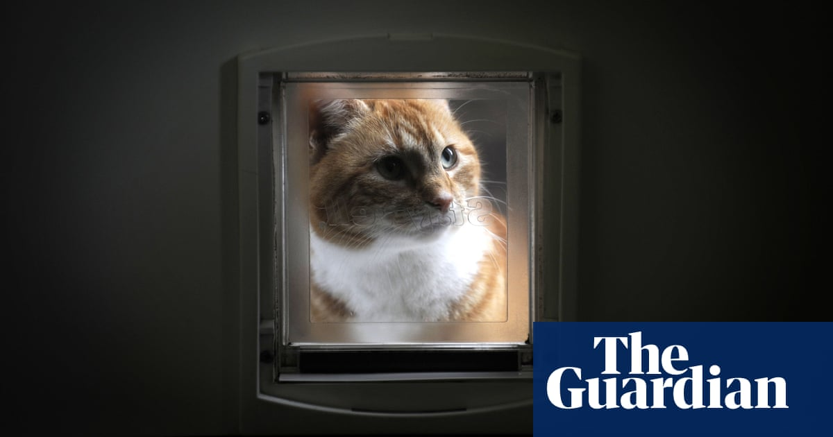Is it worth buying an electronic cat flap to keep neighbours' pets out?