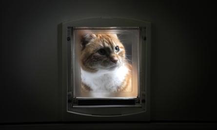 A cat looking through a cat flap