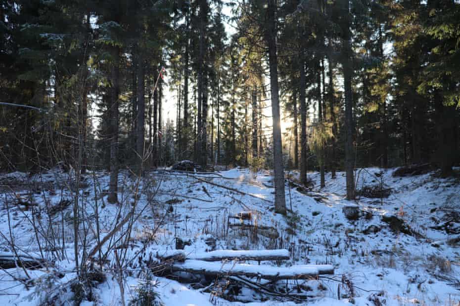 El bosque de Finlandia cubierto de nieve