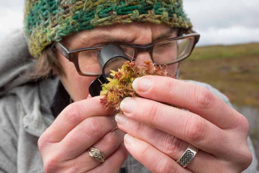 Scientist Roxane Andersen inspects a small clump of sphagnum moss on her study site in the Forsinard Flows reserve