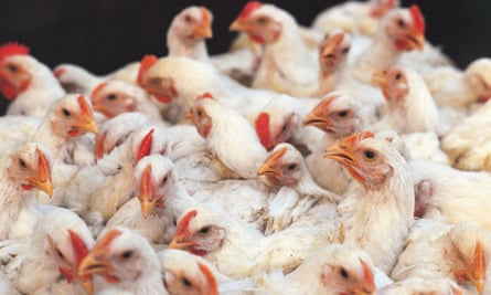 There is nothing to prevent Indian farmers, which include some of the world's biggest food producers, from exporting their chickens and other related products overseas.