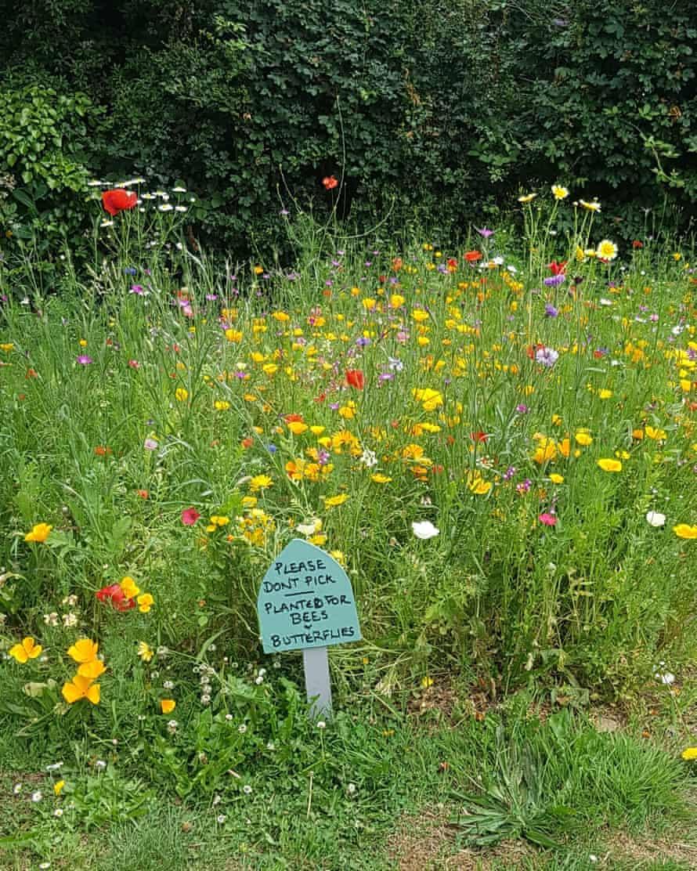 Flowers in Totnes
