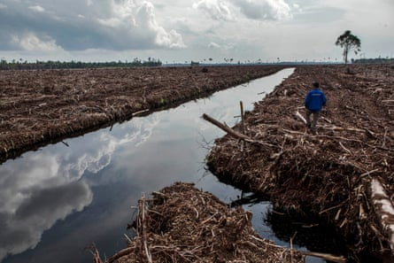 A forest activist inspects land clearing and peat drainage in Riau province, Sumatra, Indonesia